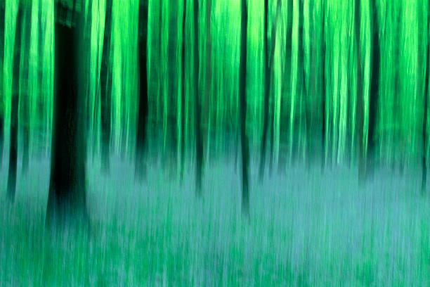 Forest of Halle, Belgium