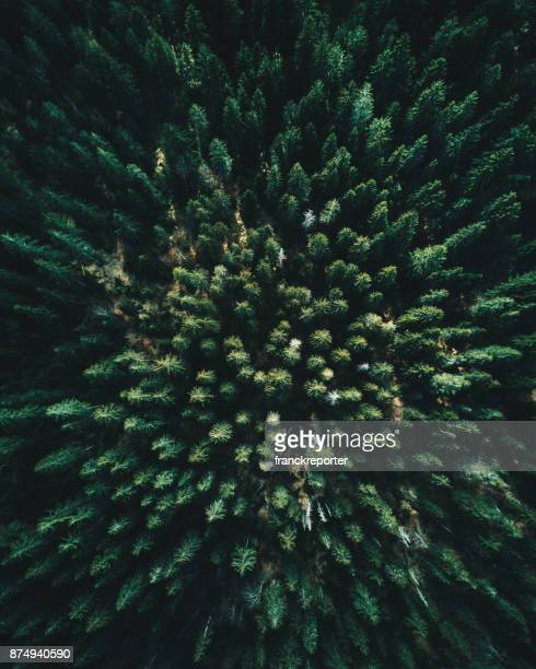 forest of tree pines aerial view - environmental conservation stock photos and pictures
