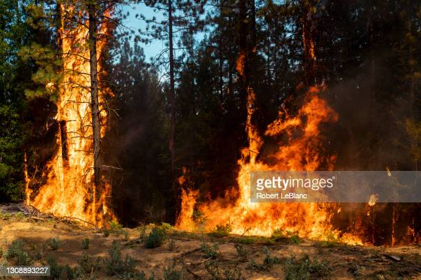forest on fire - forest fire stock pictures, royalty-free photos & images
