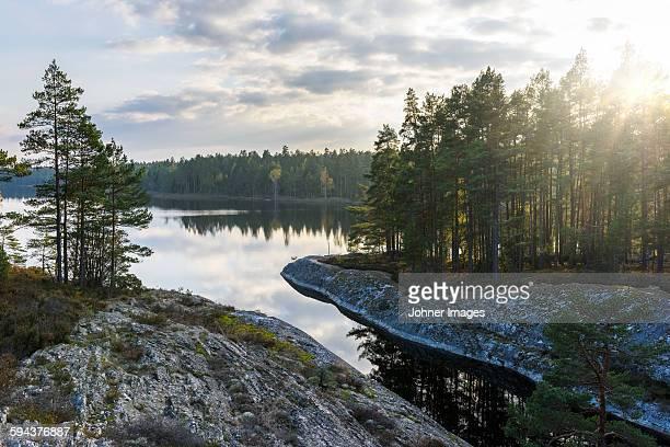 forest on rocky coast at dusk - dalsland - fotografias e filmes do acervo