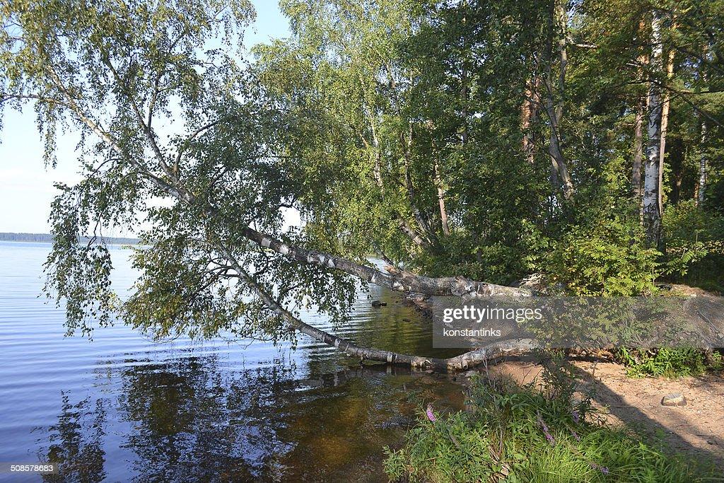 Wald am Ufer des lake : Stock-Foto