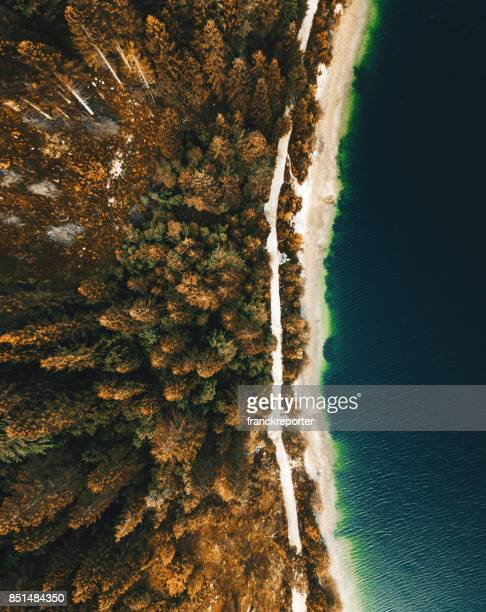 forest over the lake in autumn - pragser wildsee stock pictures, royalty-free photos & images