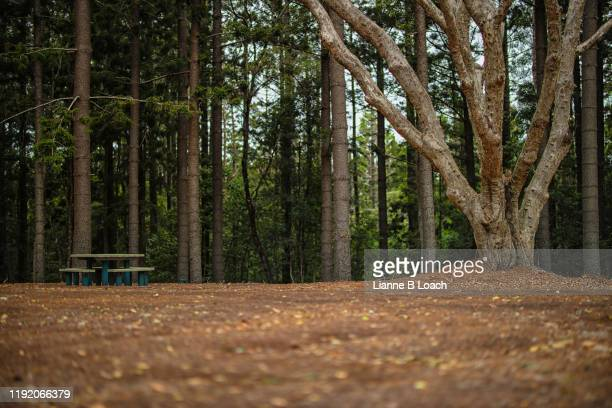forest park - lianne loach stock pictures, royalty-free photos & images