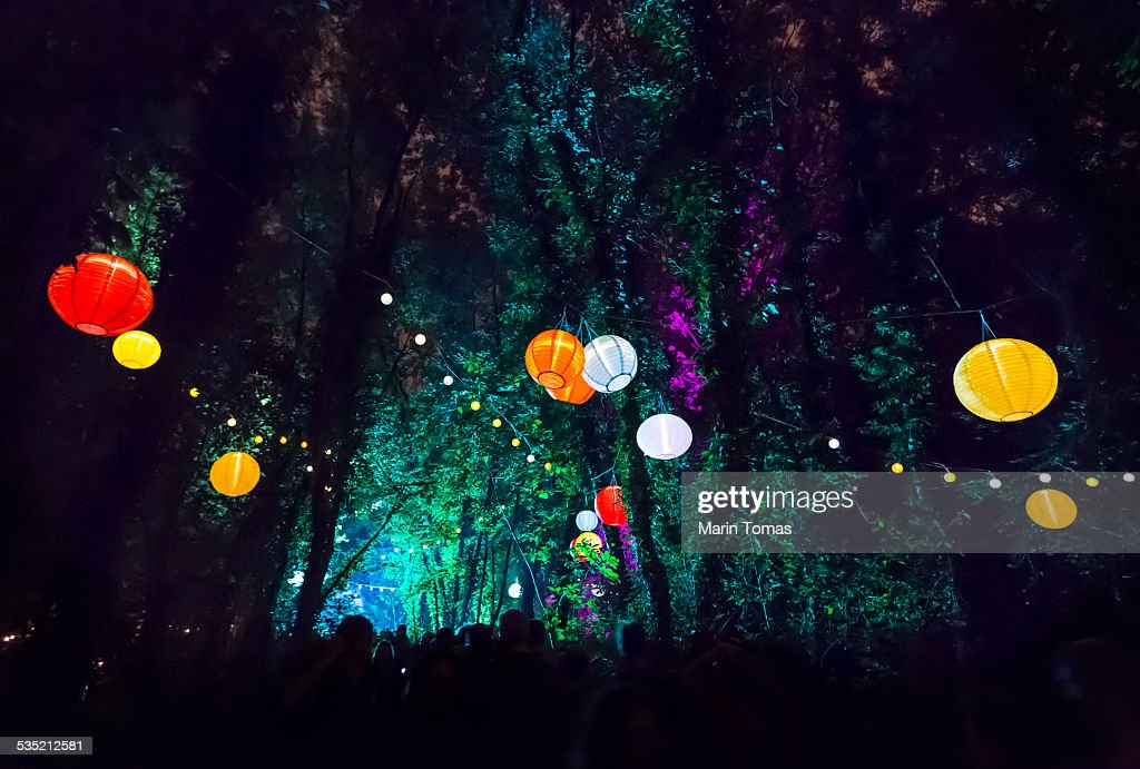 Forest party : Stock Photo
