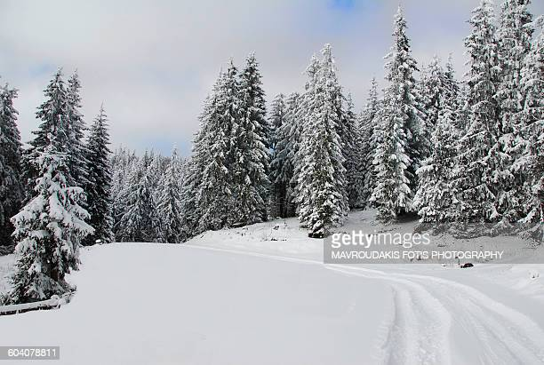 Forest path covered with snow