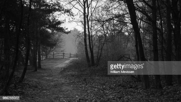 forest path 'fence' - william mevissen bildbanksfoton och bilder