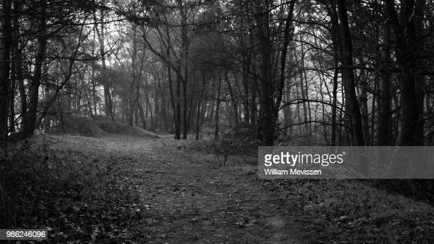 forest path 'hillocks' - william mevissen stock-fotos und bilder