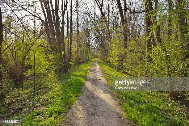 Forest Path in Spring