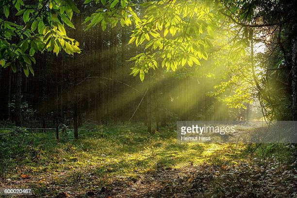 forest path in thuringia - thuringia stock pictures, royalty-free photos & images