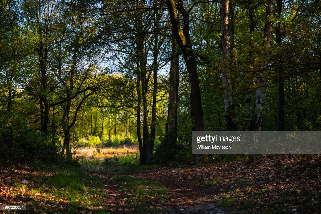 Forest Path Into The Light : Stock Photo