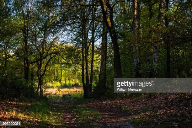 forest path into the light - william mevissen bildbanksfoton och bilder