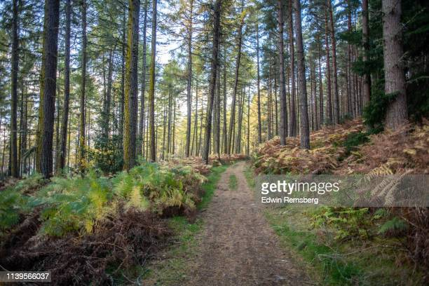 forest path - forest stock pictures, royalty-free photos & images