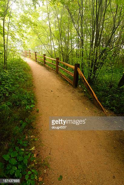forest path - pictured rocks national lakeshore stock pictures, royalty-free photos & images