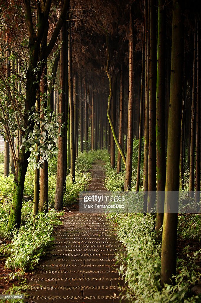 Forest path (Chengdu, China) : Stock Photo