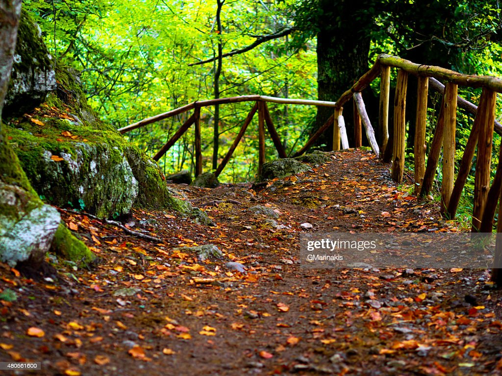 Forest path : Stock Photo