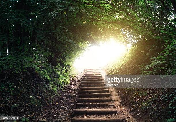 forest path - spirituality stock pictures, royalty-free photos & images