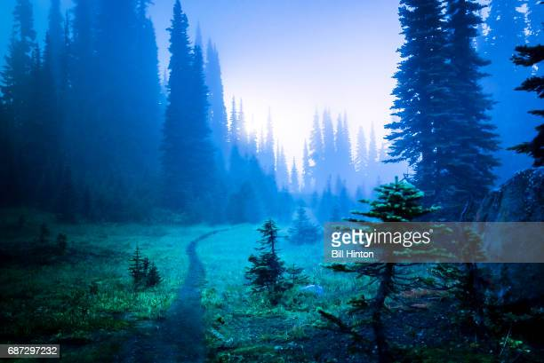 forest path - ethereal stock pictures, royalty-free photos & images