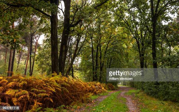forest path - william mevissen stock pictures, royalty-free photos & images