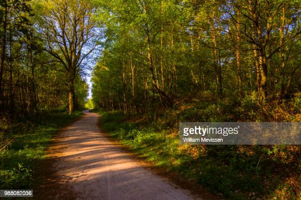 forest path 'spring' - william mevissen stock pictures, royalty-free photos & images