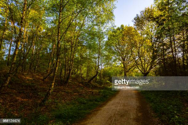 forest path 'tree' - william mevissen stock pictures, royalty-free photos & images