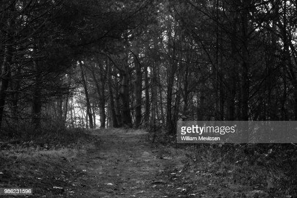 forest path 'trees' - william mevissen stock pictures, royalty-free photos & images