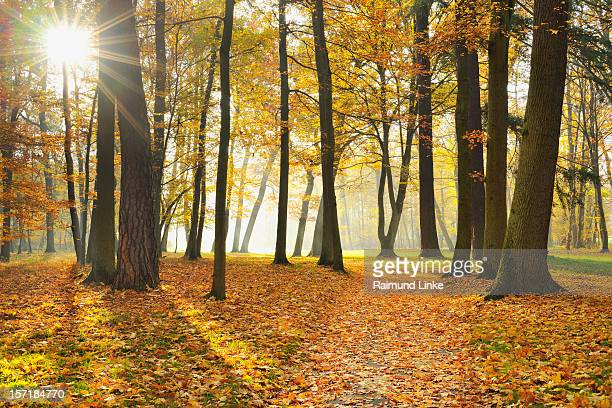 Forest Path with Sun