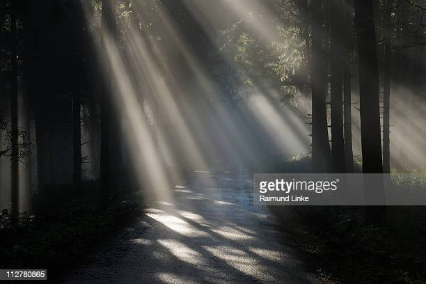 Forest path with sunbeam