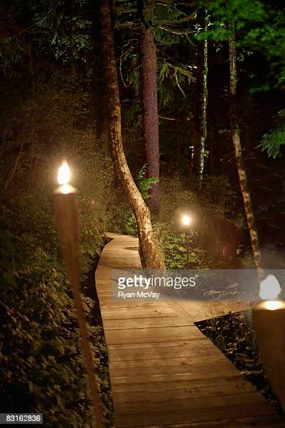 Forest pathway lit up at night by torches.
