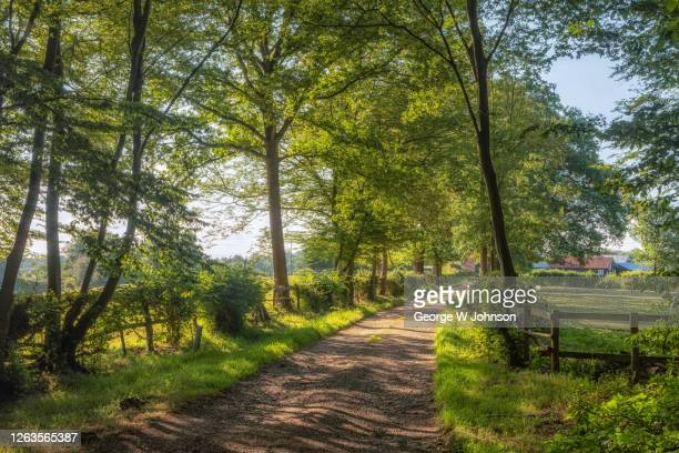 forest pathway - george wood stock pictures, royalty-free photos & images