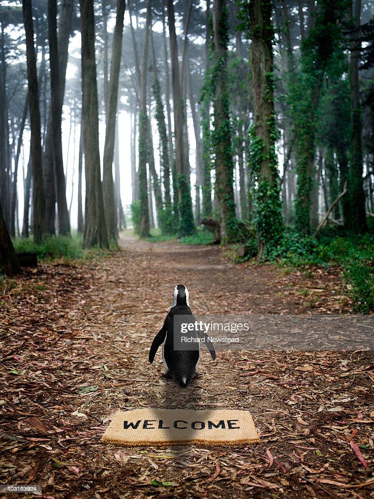 Forest Penguin : Stock Photo