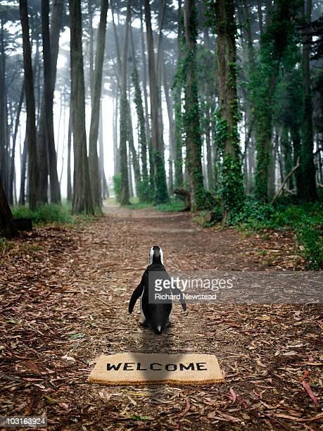 Pinguim-floresta