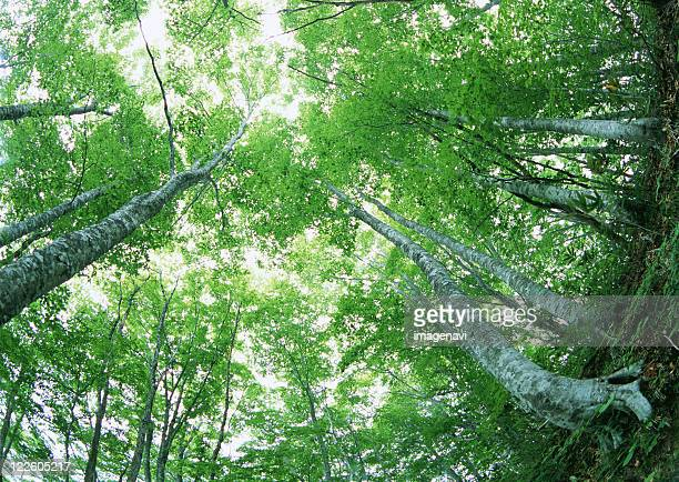 forest - 山形県 ストックフォトと画像