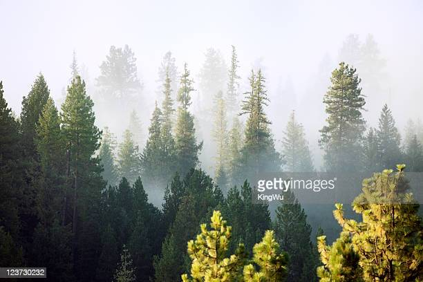 forest - washington state stock pictures, royalty-free photos & images