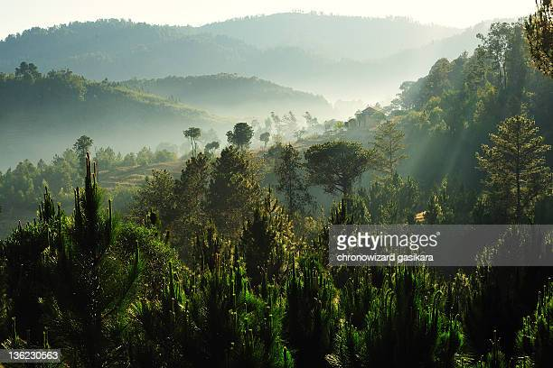 forest - madagascar stock photos and pictures
