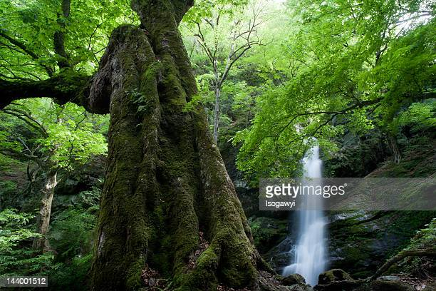 forest - isogawyi stock pictures, royalty-free photos & images