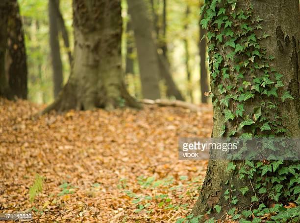 forest. - boomstam stockfoto's en -beelden