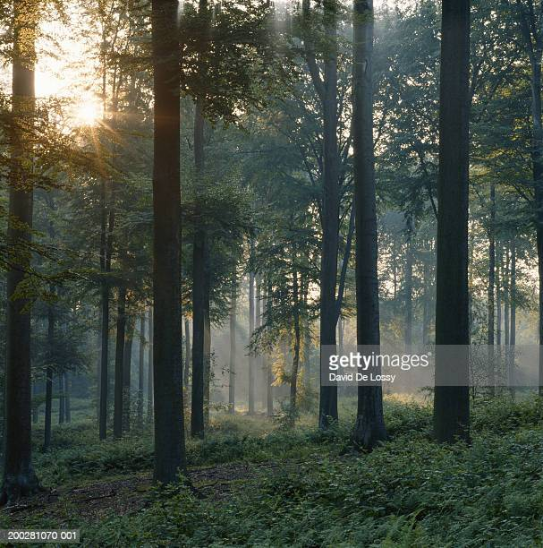 forest - tree trunk stock pictures, royalty-free photos & images