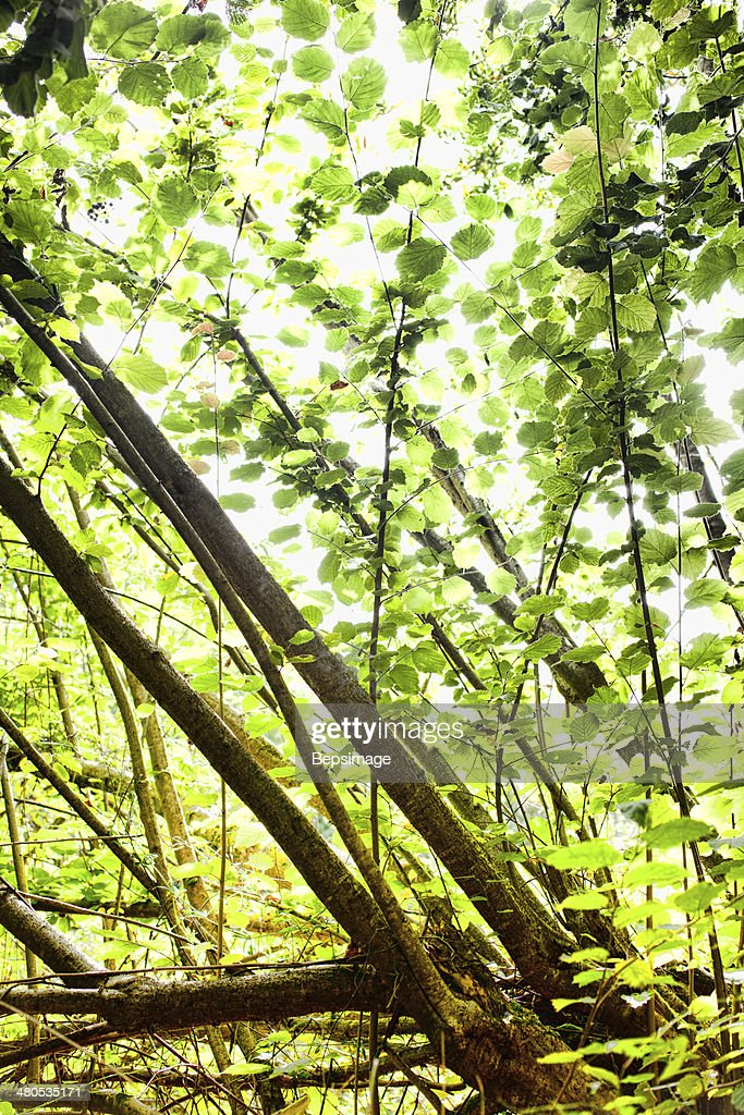 Forest : Stock Photo