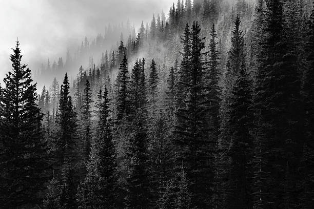 Free Black And White Mountain Images Pictures Royalty