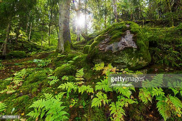 forest - national park stock pictures, royalty-free photos & images