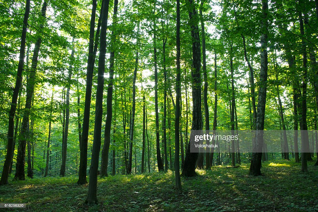 Bosque  : Foto de stock