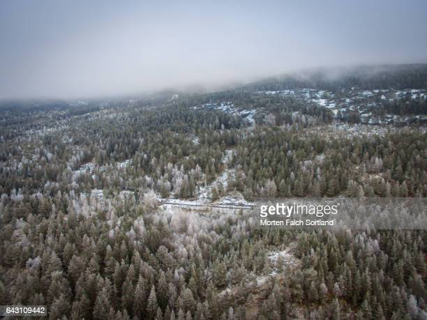 forest - winter sports event stock pictures, royalty-free photos & images