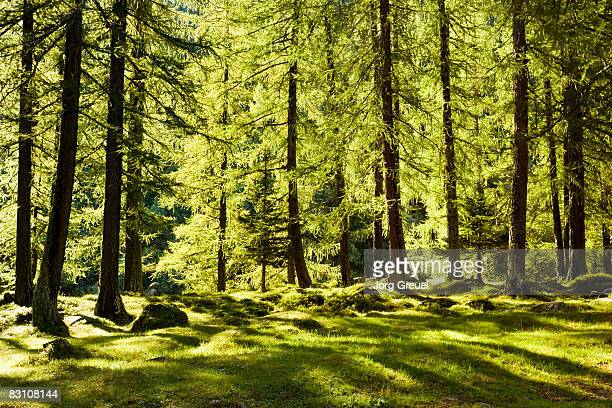60 Top Forrest Music Pictures, Photos and Images - Getty Images