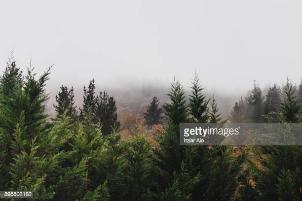 forest - treetop stock pictures, royalty-free photos & images
