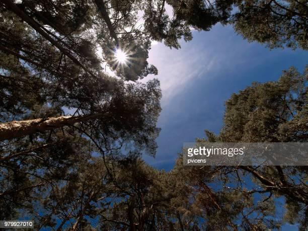 forest - inclinando se - fotografias e filmes do acervo