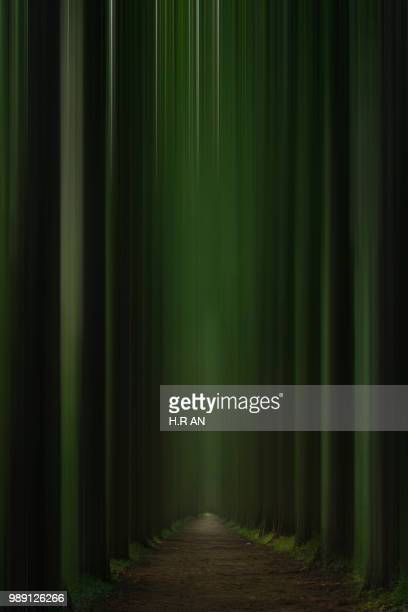 forest - velvet stock photos and pictures