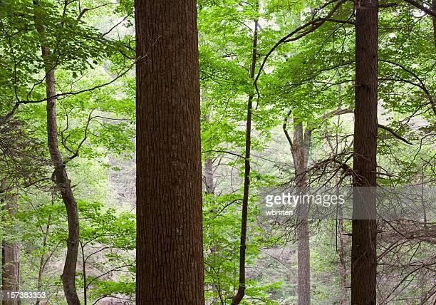 forest primeval series (xxl) - roaring fork motor nature trail stock pictures, royalty-free photos & images