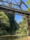 forest railway bridge forest railway bridge
