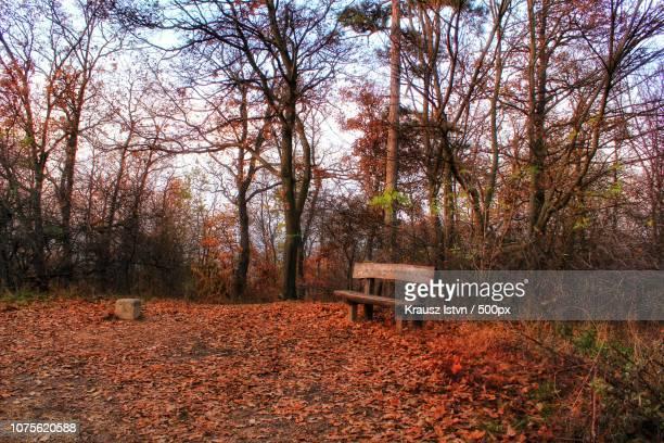 forest recreation - krausz stock-fotos und bilder