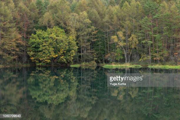 Forest Reflected in a Beautiful Pond in Early Autumn